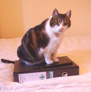 Cat n File